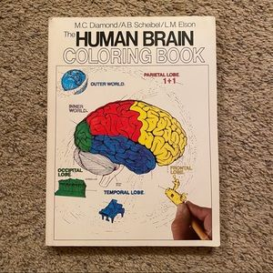 ‼️The Human Brain Anatomy Coloring Book‼️